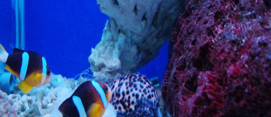 在新澳海底世界可以欣赏到各种美丽的海洋生物,领略到东方夏威夷的
