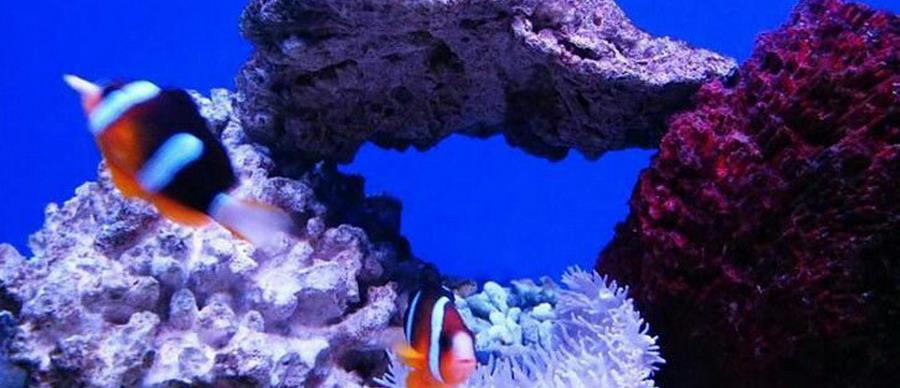 新澳海底世界 海豚表演馆 - 秦皇岛 - 秦皇岛中国青年