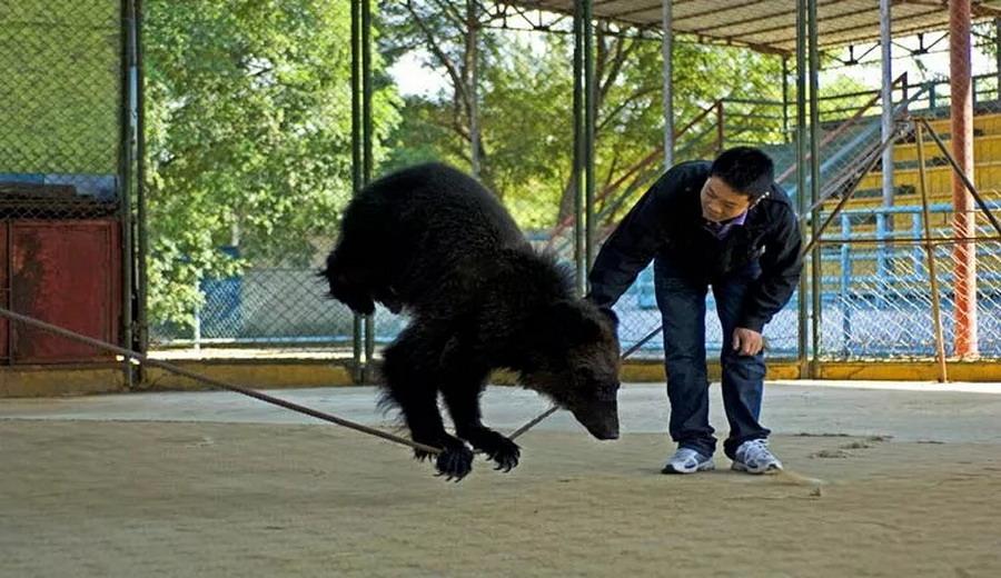 猴子骑车 秦皇岛野生动物园
